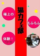 猫カフェ部告知ブログ画像.jpg